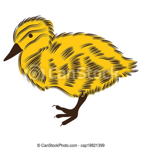 Duckling - csp19821399