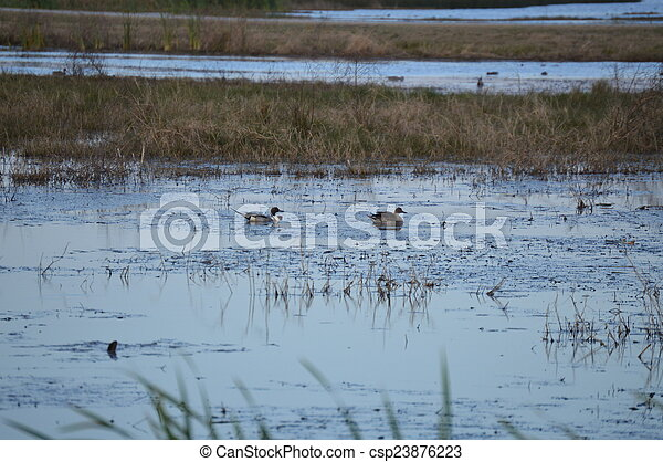 Ducks on a pond - csp23876223