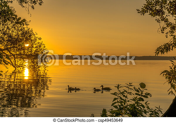 Ducks on a small lake at sunrise - csp49453649