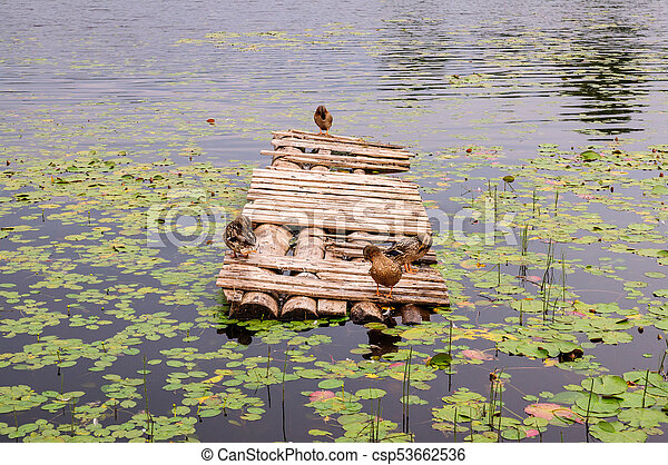 Ducks on a wooden pier on pond. Sleeping duck on the old wooden bridge with sea view - csp53662536