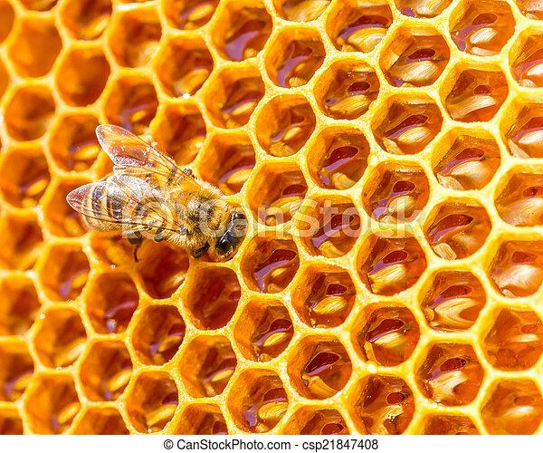 La abeja trabaja en panal con miel dulce - csp21847408