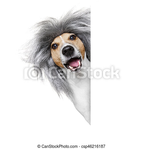 dumb silly crazy dog - csp46216187