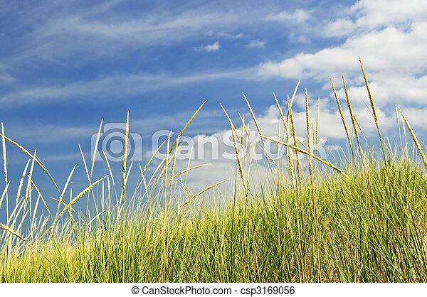Hierba alta en dunas de arena - csp3169056