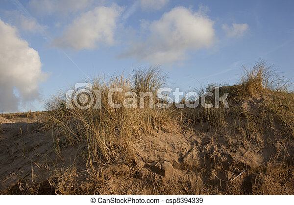 dune, cielo blu, olandese - csp8394339