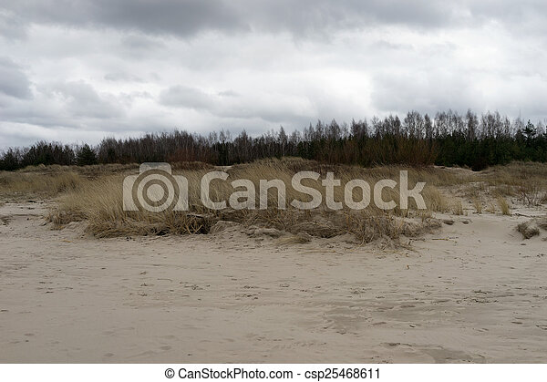 Dune grass with yellow line in the sand and pine  - csp25468611