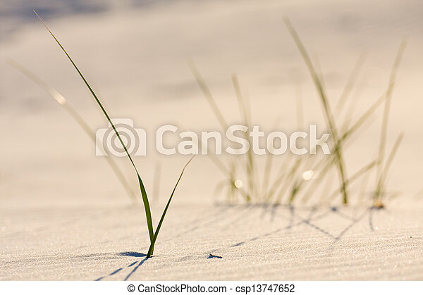 Dune on Beach at Sunset  - csp13747652