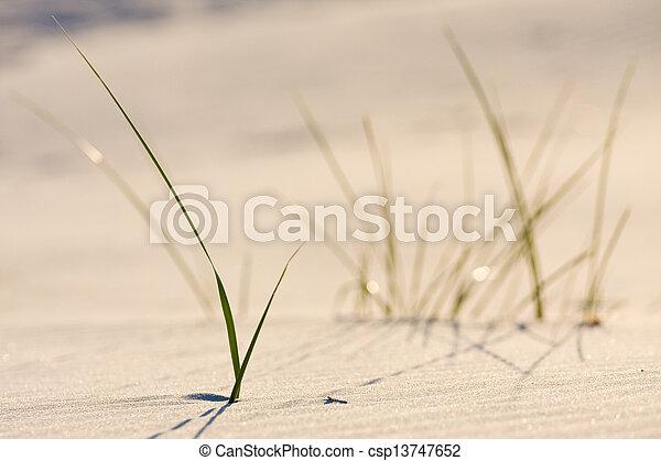 Dune on Beach at Sunset  - csp13747652