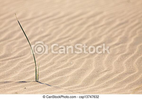 Dune on Beach at Sunset  - csp13747632