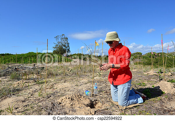 Dune restoration in Gold Coast Queensland Australia - csp22594922