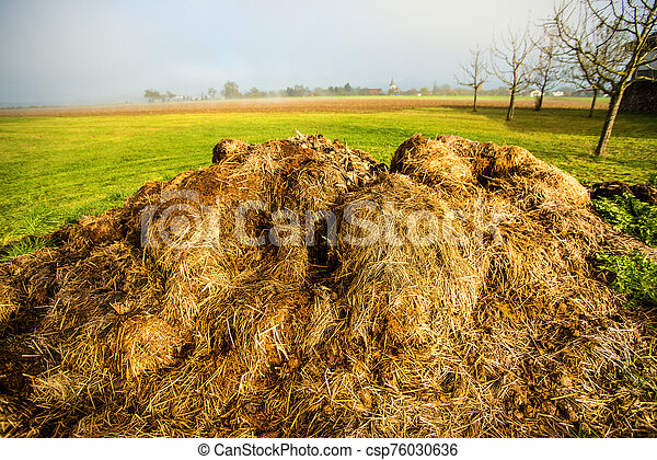 dung hill in a meadow - csp76030636
