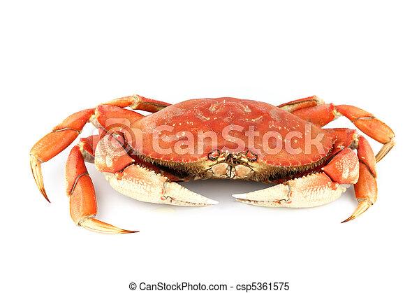 dungeness crab - csp5361575