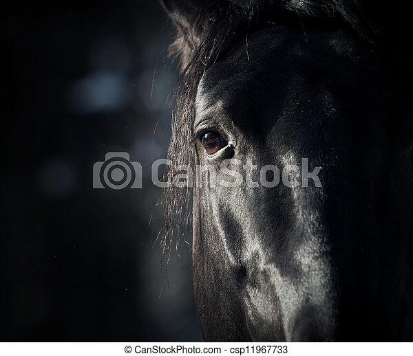 dunkel, pferd, auge - csp11967733