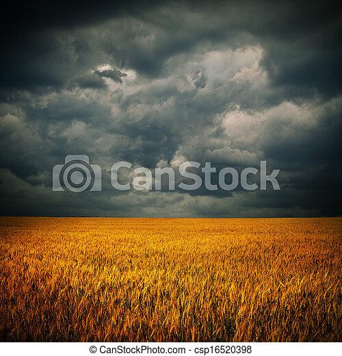 Dunkle Wolken über Weizenfeld - csp16520398