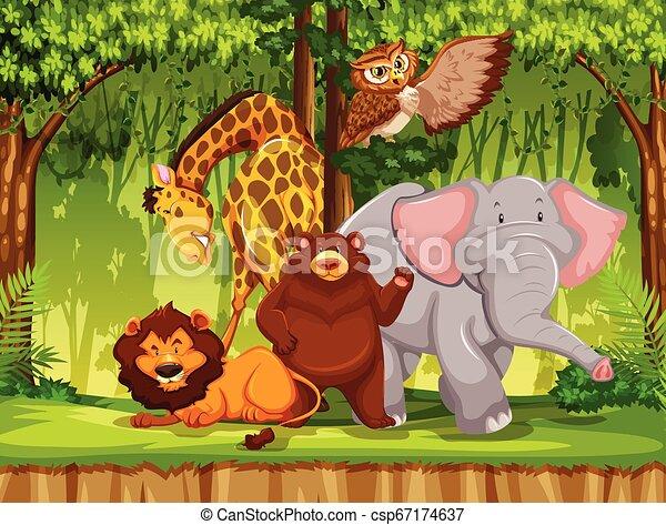 dziki, dżungla, zwierzę - csp67174637