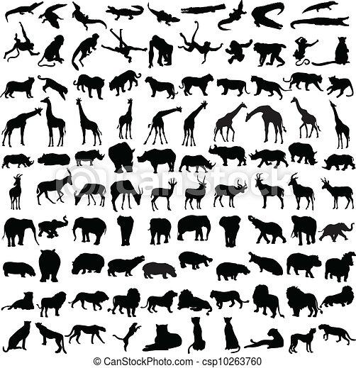 dziki, sylwetka, sto, zwierzęta - csp10263760
