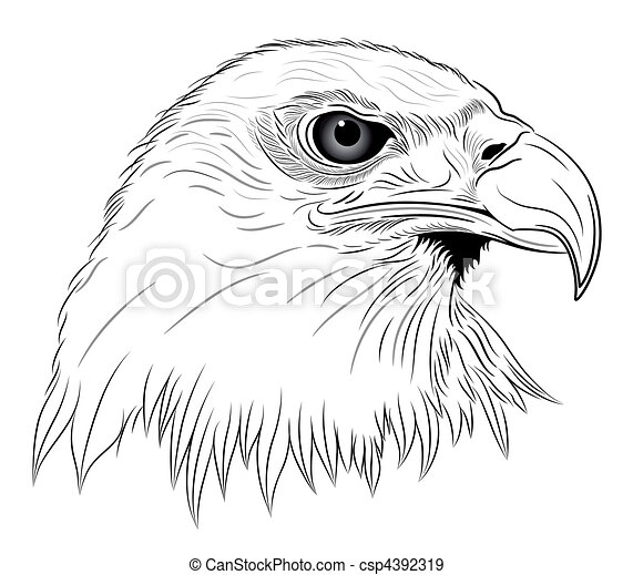 Eagle - csp4392319