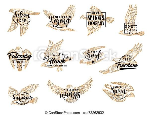 eagle falcon and hawk birds falcon and eagle bird