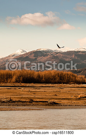 Eagle in fall - csp16511800