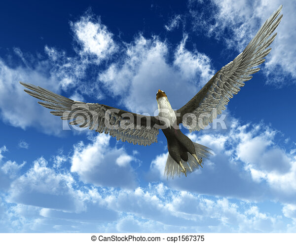 Eagle In Sky An Flying High The