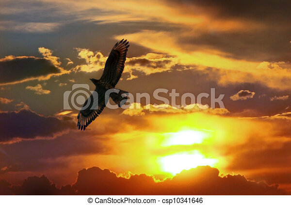 Eagle In Sunset The Sky