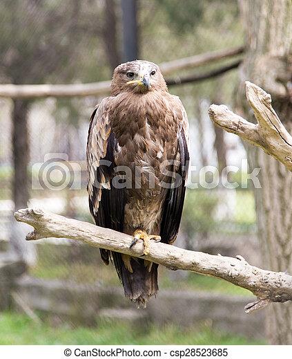 eagle on a tree - csp28523685