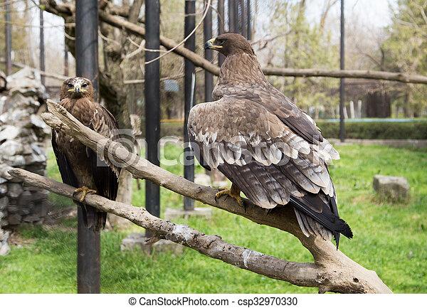 eagle on a tree - csp32970330