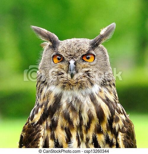 Eagle Owl bird - csp13260344
