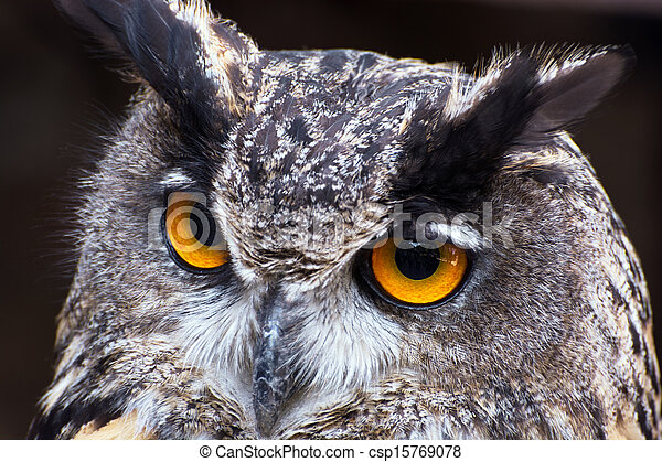Eagle owl (Bubo bubo) - csp15769078