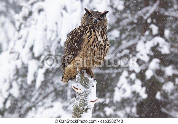 Eagle owl /Bubo Bubo/ - csp3382748