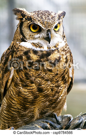 eagle owl, Bubo bubo - csp9784566