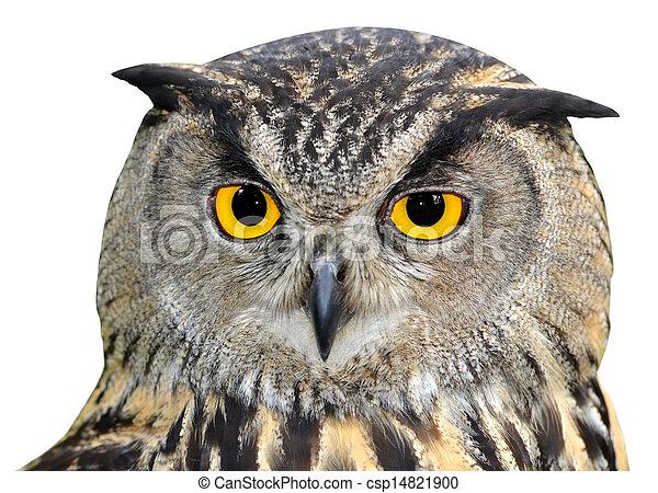 Eagle Owl, Bubo bubo - csp14821900