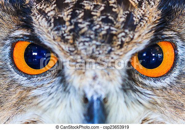 Eagle Owl (Eurasian eagle owl) Bubo bubo - csp23653919