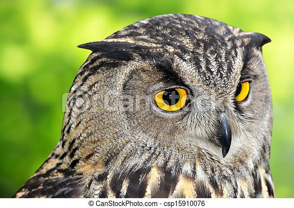 Eagle Owl - csp15910076