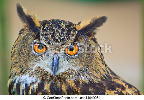 Eagle Owl - csp14049084