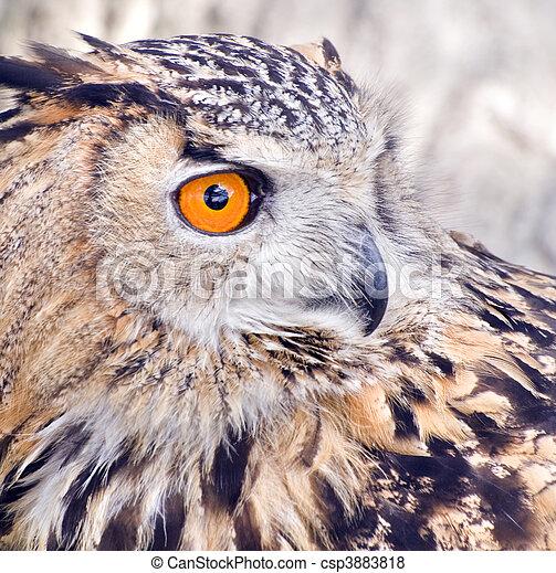 Eagle Owl - csp3883818