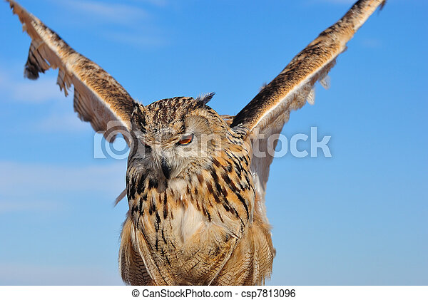Eagle Owl. - csp7813096