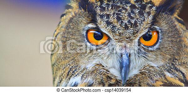 Eagle Owl - csp14039154