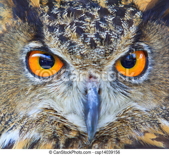 Eagle Owl - csp14039156