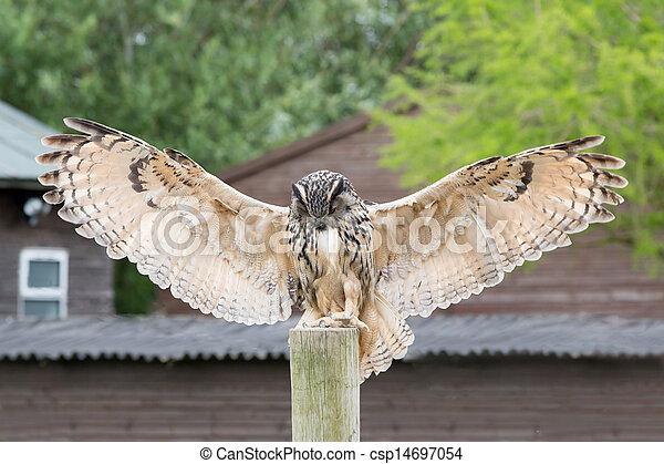 Eagle Owl - csp14697054
