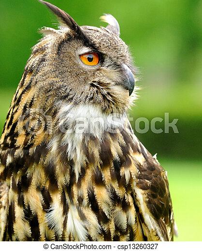 Eagle Owl - csp13260327