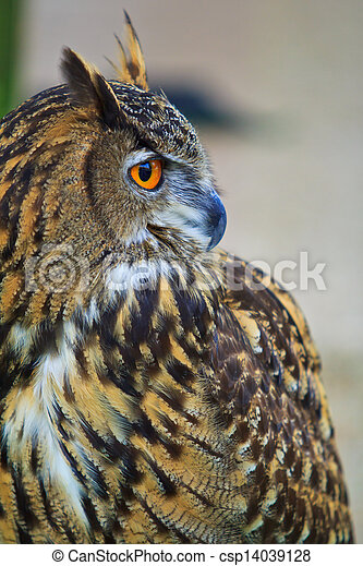 Eagle Owl - csp14039128