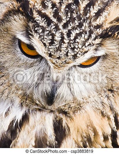 Eagle Owl - csp3883819