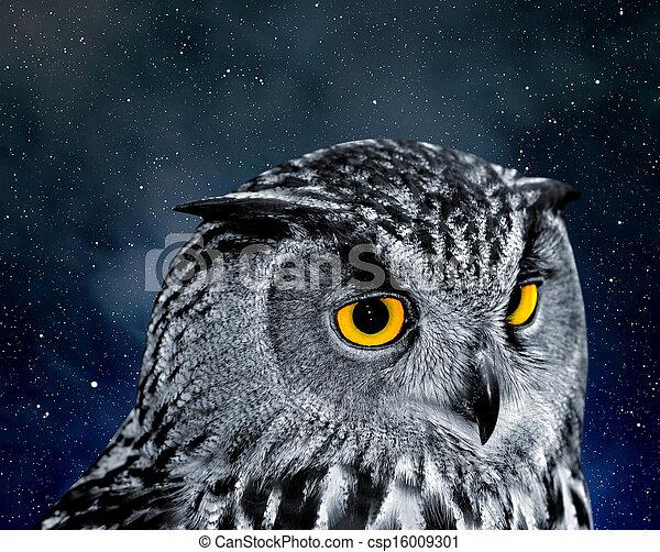 Eagle Owl - csp16009301