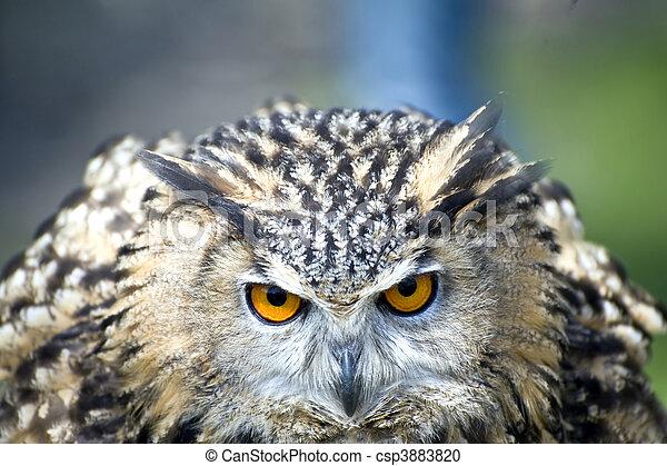 Eagle Owl - csp3883820