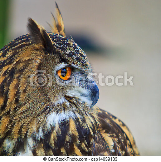 Eagle Owl - csp14039133