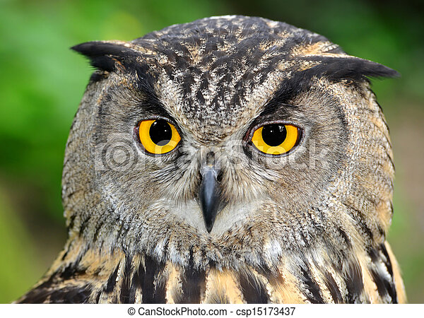 Eagle Owl - csp15173437