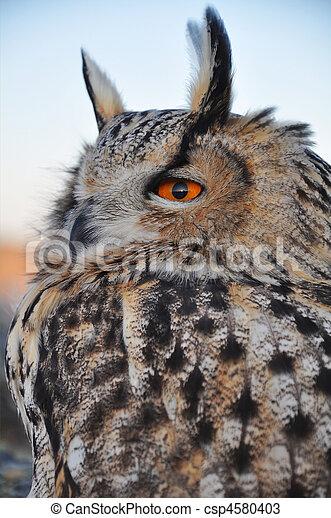 eagle-owl - csp4580403