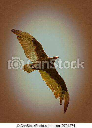 eagle - csp10704274