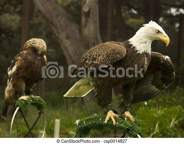 Eagle preflight - csp0014827