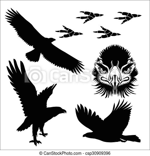 eagle silhouette poses of eagle and close up drawing face
